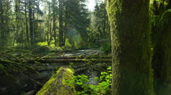 Fallen trees and creek, Oregon Stock Footage