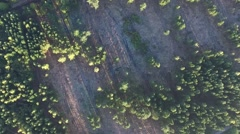 Flight over bavarian forest Stock Footage