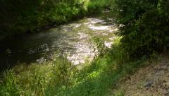 Clear brooklet flows through the magical forest Stock Footage
