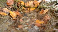Water drop landing in small puddle surrounded by autumn leaf and green grass Stock Footage