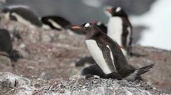 Penguins in Antarctica Stock Footage