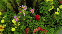 Flower Garden in city park Stock Footage