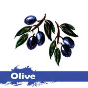 Hand drawn watercolor painting on white background.  fruit olive - stock illustration