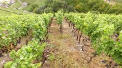 Aerial video of winegrowing Stock Footage