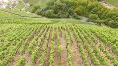Aerial video of Vineyards in germany Stock Footage
