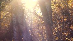Stock Video Footage of Enchanted Light Autumn Forest Flares and Rays HD