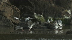 Slow motion shot of seagulls at beach Stock Footage