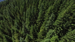 Aerial shot of forest, Oregon Stock Footage