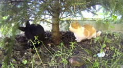 Black rabbit playing with a yellow cat under pine Stock Footage