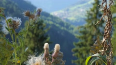 Plants in austria at day Stock Footage