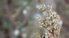 Stock Video Footage of Seeds of weeds