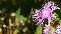 Plants in austria - stock footage
