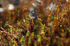 Forest moss in sun rays closeup - stock photo