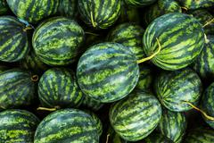 Close up green watermelon for agriculture produce Stock Photos