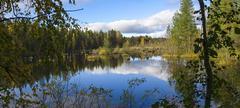 Beautiful swamp in nothern taiga Kuvituskuvat