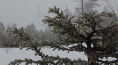 Heavy snowfall in  winter nature weather Stock Footage