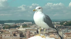 Seagull atop  the Vittoriano - Rome - stock footage
