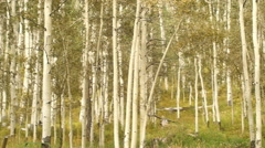 National forest cabin in woods Stock Footage