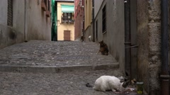 A cat eating in a historic cobblestone alley with others in the background. Stock Footage