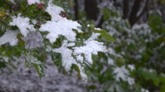 Green leaves with snow  2 Stock Footage