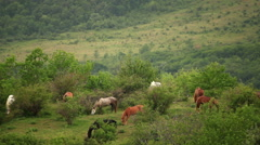 Multicolored horses eating. Early spring. Stock Footage