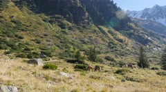 Stock Video Footage of extreme long shot - Group Wild Horses in mountain landscape grass