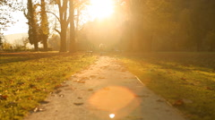 Autumn in the park with lights sun Stock Footage