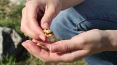 Young woman hands cracking walnut nuts in the backyard Stock Footage