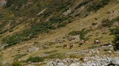Stock Video Footage of extreme long shot - Wild Horses in mountain landscape stand grass