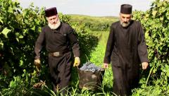 Monks harvesting grapes Stock Footage