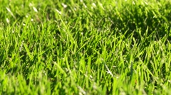 Spring Meadow. Green Grass.  Nature Background. Full HD 1080 stock video Stock Footage