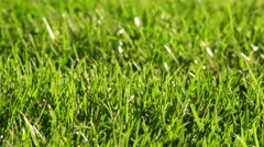 Spring Green Grass Macro.  Nature Background. Full HD 1080 stock video footage Stock Footage