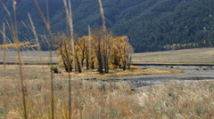 Lamar Valley, Yellowstone Stock Footage