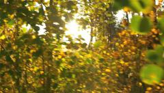 Moving sun shining through golden aspen tree branches on fall day Colorado Stock Footage