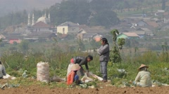 Workers in field with village background,Dieng,Java,Indonesia Stock Footage