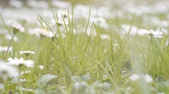 Running through daisy garden at ground level Stock Footage