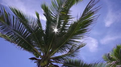 HD Format : Coconut tree on the beach in Koh Phangan, Suratthani, Thailand - stock footage