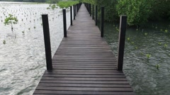 Mangrove forest and wood bridge Stock Footage