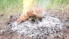 The fire in the forest in nature. Camping. Stock Footage