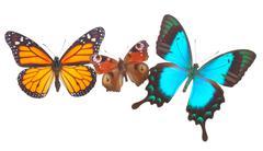 Peacock, monarch and Sea Green Swallowtail butterflies Stock Photos
