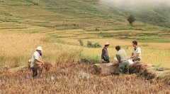 Yuanyang Rice Terraces Stock Footage