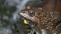 Frog in the pond. Stock Footage