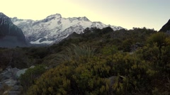 Nature Plants At Hooker Valley Track, Mount Sefton In Background Stock Footage