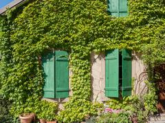 Stock Photo of overgrown house facade in Riquewihr, a town in Alsace, France