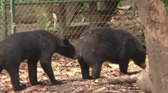 Bears in reservation, Luang Prabang, Laos Stock Footage