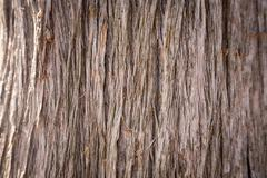 Wooden texture close up photo , nice background or texture Kuvituskuvat
