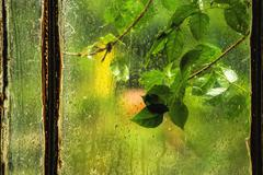 Stock Photo of Green leaves on rainy window