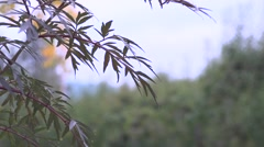 Fall/Autumn: Foliage - stock footage