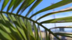 Slowmotion. Seaport dock's cranes through palm leaves. Batumi. Georgia Stock Footage