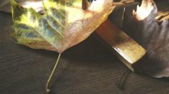 A vintage hanger in a tilting shot through vintage leaves Stock Footage